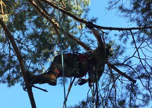 Kletterausrüstung Baumpflege : Seiltechnik hannover
